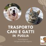 trasporto cani puglia
